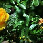 Цветы Ирины Колендовской