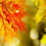 Из жизни осенних листочков