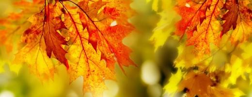 листья 2