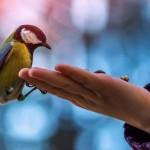 Птица в руке