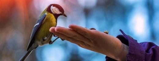 птица2
